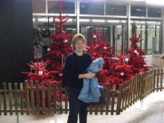 Among the orly christmas trees